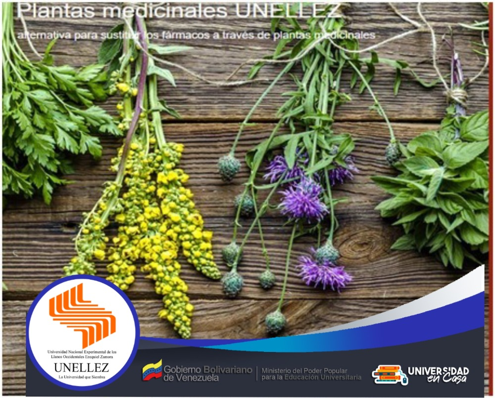 Estudiantes de Extensión Municipalizada Sanare crean Blog  de Plantas Medicinales