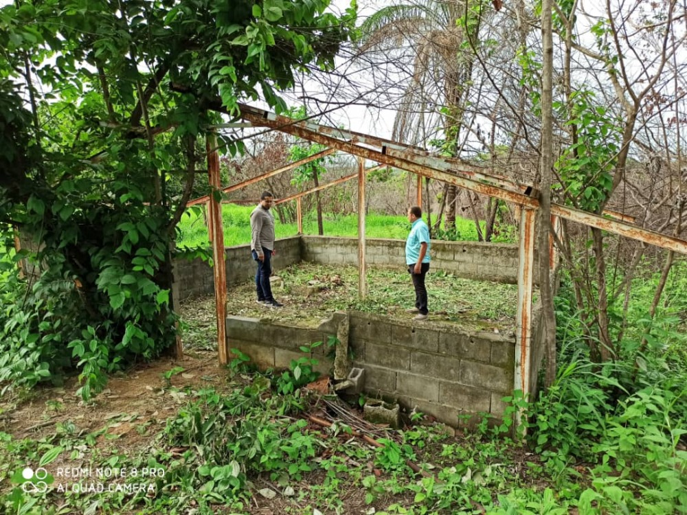 Unellez avanza con siembra de maíz en Centro de Mejoramiento Genético Ezequiel Zamora