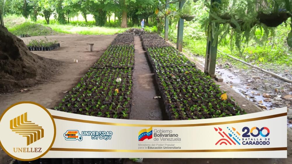 Jardín Botánico Implementa Plan Maestro Productivo de Siembra