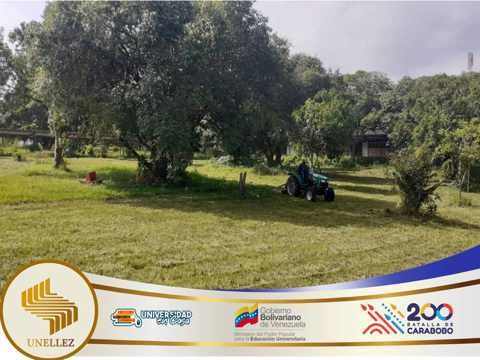 VIPI   realiza  trabajos e limpieza de las áreas verdes